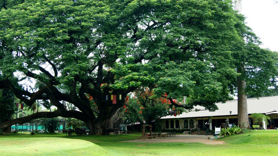 Chiang Mai Gymkhana chiangmaigymkhana